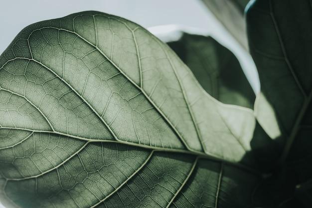 Le foglie verdi zumano il dettaglio della foglia, il tono di colore vintage.