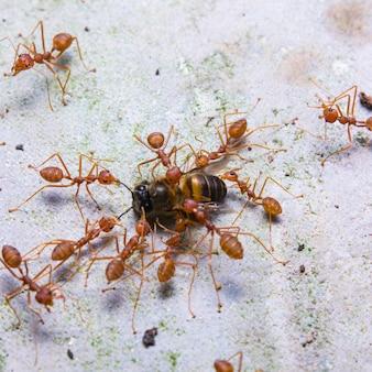 Le formiche cercano cibo