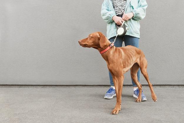Le gambe della ragazza e un cane marrone