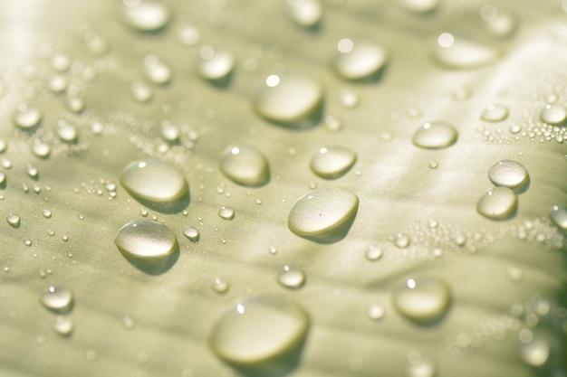 Le gocce di pioggia sul primo piano della foglia verde guardano di recente
