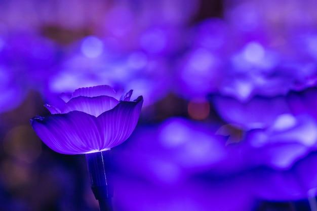 Le luci sono decorate come fiori per creare una bella luce di notte al festival.