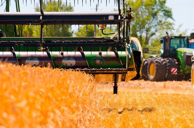 Le macchine agricole raccolgono il raccolto di grano giallo in pieno campo
