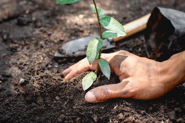 Le mani degli uomini piantano piantine nei terreni.