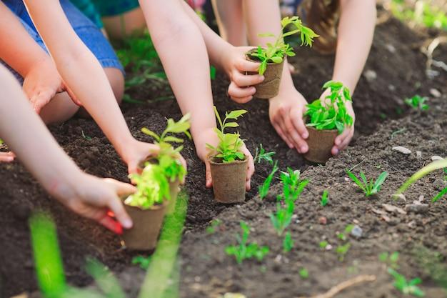 Le mani dei bambini che piantano il giovane albero su suolo nero insieme come il concetto del mondo di salvataggio