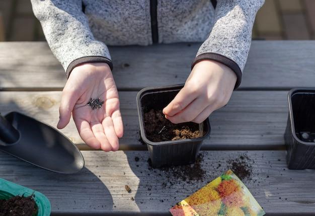 Le mani dei bambini mettono i semi delle piante in un vaso da semenzale, in piedi su un tavolo di legno educazione dei bambini della natura orizzontale