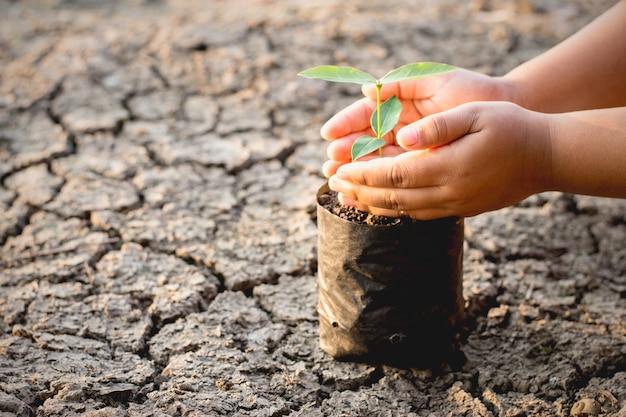 Le mani dei bambini stanno mettendo sacchetti di piantine che crescono su terreni aridi.