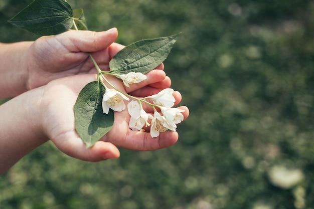 Le mani del bambino tengono il fiore bianco