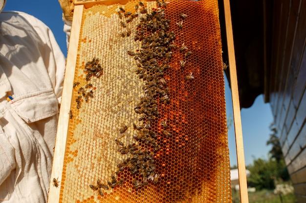 Le mani del primo piano dell'apicoltore tengono la struttura di legno con il favo.