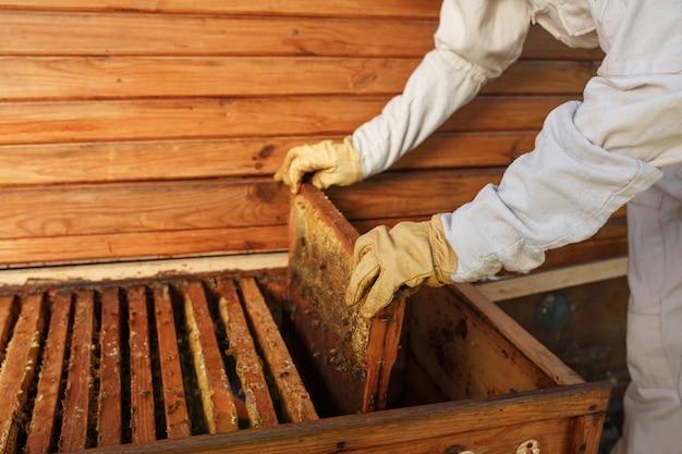 Le mani dell'apicoltore estrae dall'alveare una cornice di legno con nido d'ape