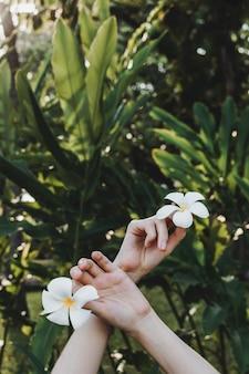 Le mani della donna che tengono la plumeria o il frangipane fiorisce in mani in foresta tropicale, fuoco selettivo