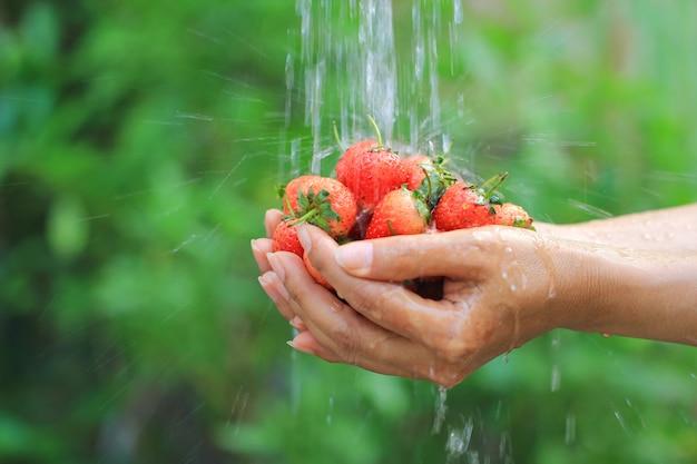 Le mani della donna che tengono le fragole fresche stanno lavando sotto l'acqua corrente nel fondo verde naturale