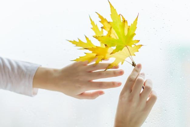 Le mani della donna con il ramo delle foglie di acero gialle di autunno