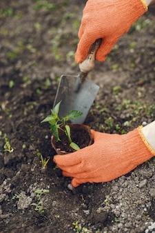 Le mani della donna in guanti che piantano plantula