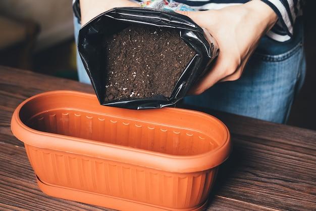 Le mani delle donne hanno versato del terriccio nel vaso per far crescere le piante