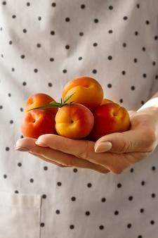 Le mani femminili cuocono in azienda gustose albicocche frutta fresca. avvicinamento.