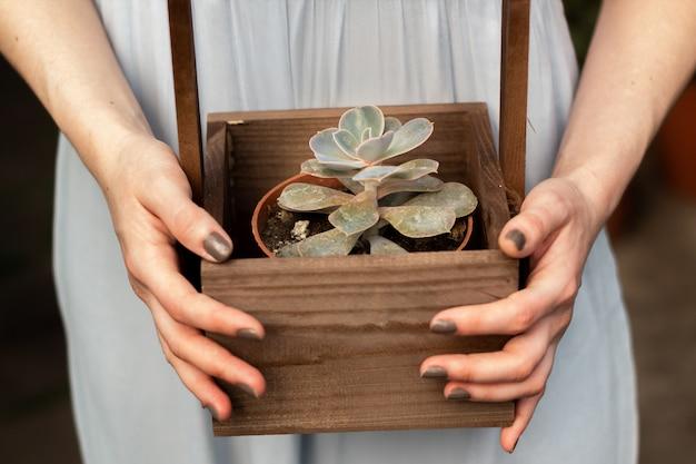 Le mani femminili tengono un vaso con succulente