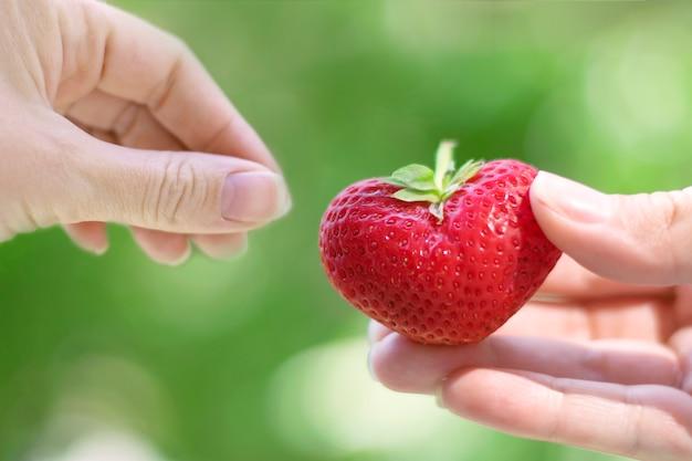 Le mani femminili trasmettono fragole a forma di cuore. il concetto di amore, bellezza, tenerezza.