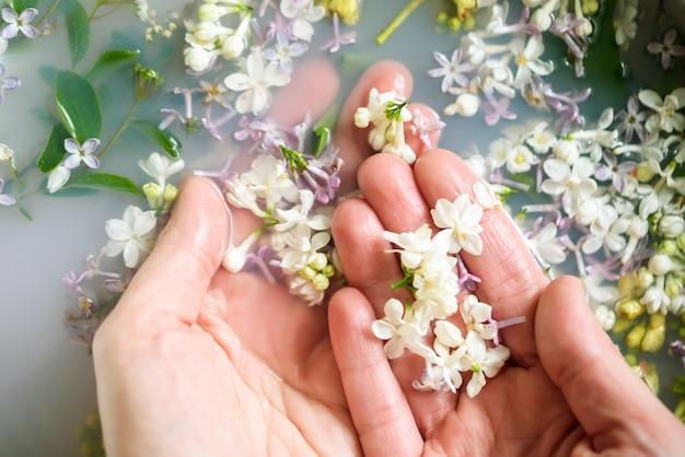 Le mani tengono fiori lilla di diversi colori in acqua con latte.