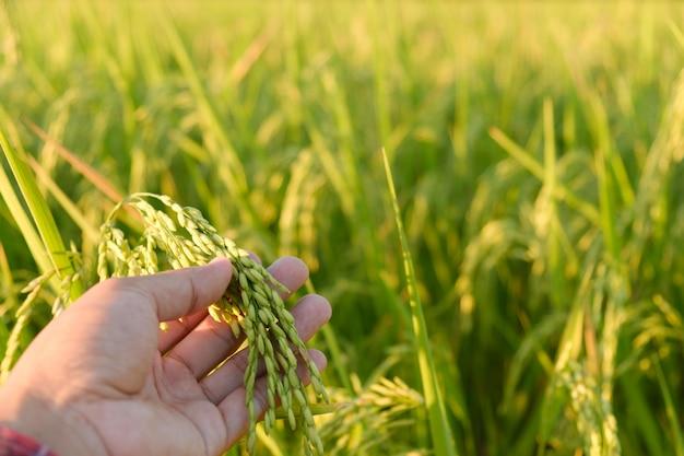 Le mani toccano le orecchie alla fattoria