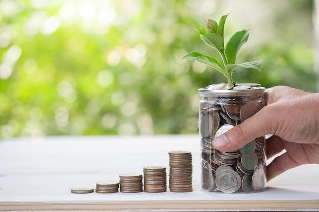 Le monete che impilano con la pianta crescente su pianta hanno offuscato il fondo e la luce solare è uso per il risparmio e l'investimento a lungo termine