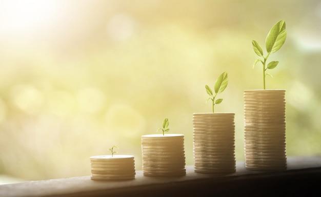 Le monete dei soldi impilano la pianta crescente. finanza aziendale e concetto di denaro.