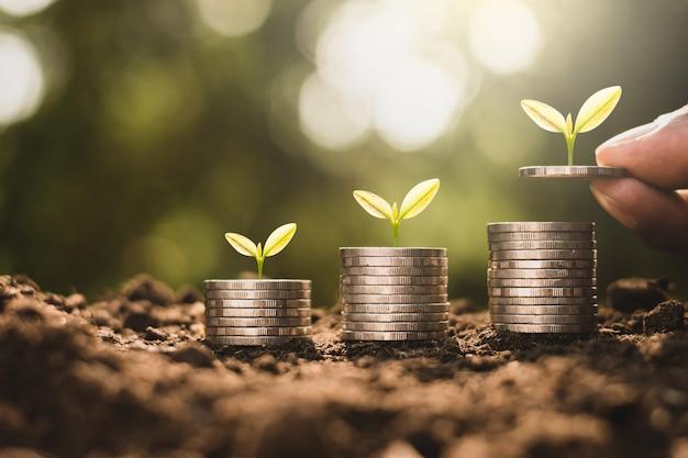 Le monete sono impilate in cima al terreno e le piantine crescono in cima con il sole che splende al mattino.