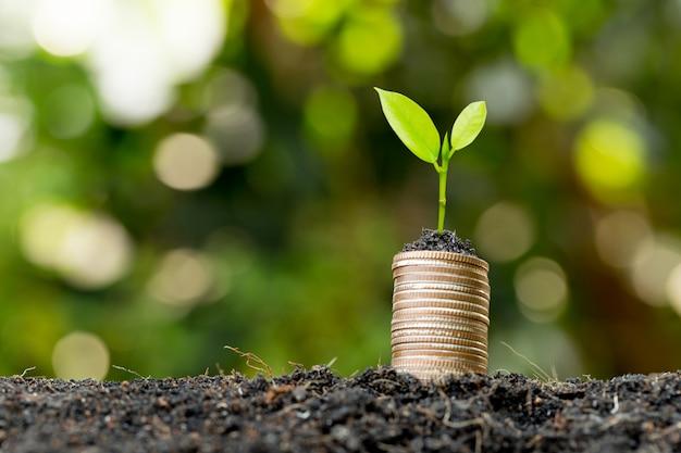 Le monete sono impilate sul terreno e le piantine crescono in cima
