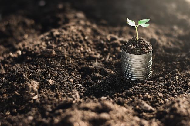 Le monete sono impilate sul terreno e le piantine crescono sopra.