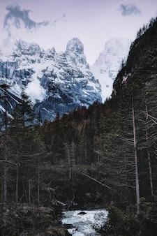 Le montagne ricoperte neve si avvicinano alla foresta