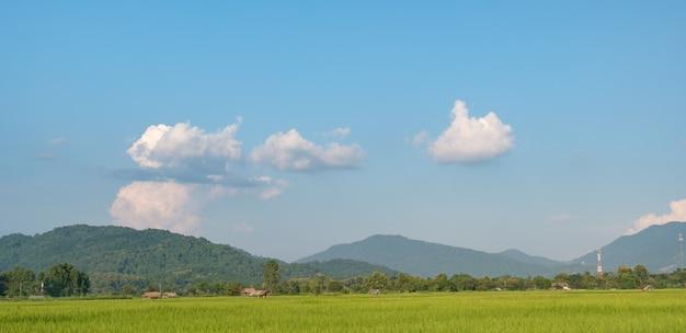 Le nuvole bianche hanno una strana forma. campo di riso e montagna con copyspace