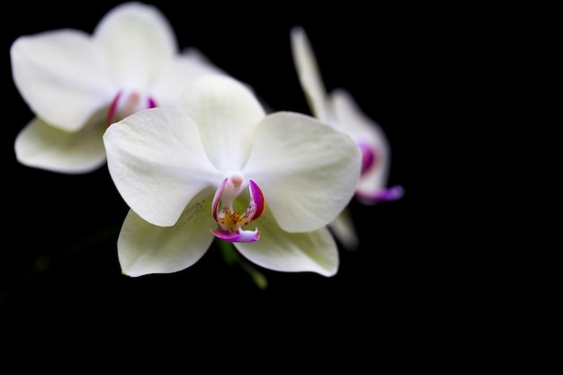 Le orchidee nel giardino hanno uno sfondo nero.