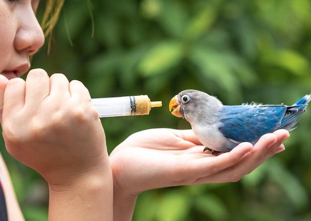 Le persone danno da mangiare al simpatico uccello dell'amore