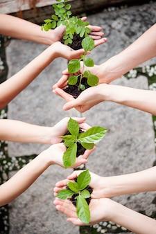Le persone piantano alberi giovani