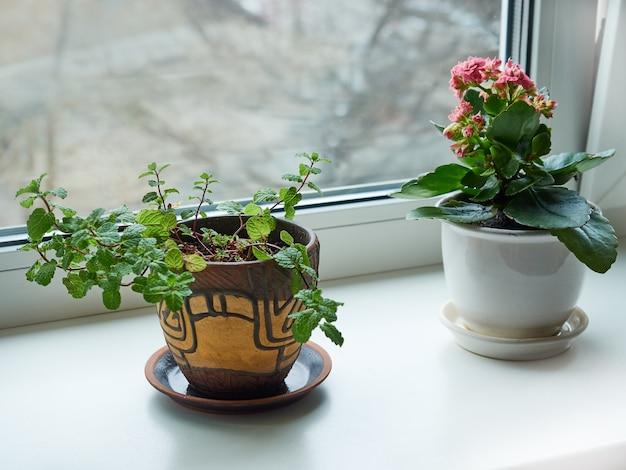 Le piante domestiche crescono sul davanzale della finestra