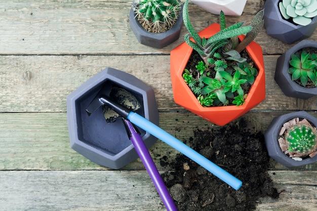 Le piante domestiche sono piantate in vasi. succulente e cactus nella vista superiore dei vasi su una tavola di legno. strumenti e terreni per piantare piante. concetto di semina primaverile