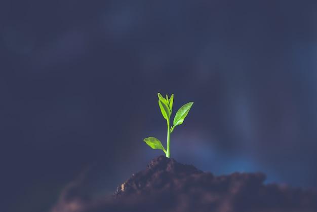 Le piantine crescono nel terreno. piantare alberi per ridurre il riscaldamento globale.