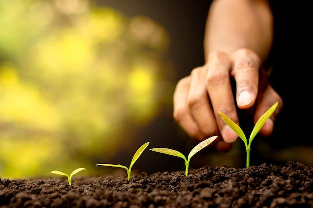 Le piantine stanno crescendo dal suolo