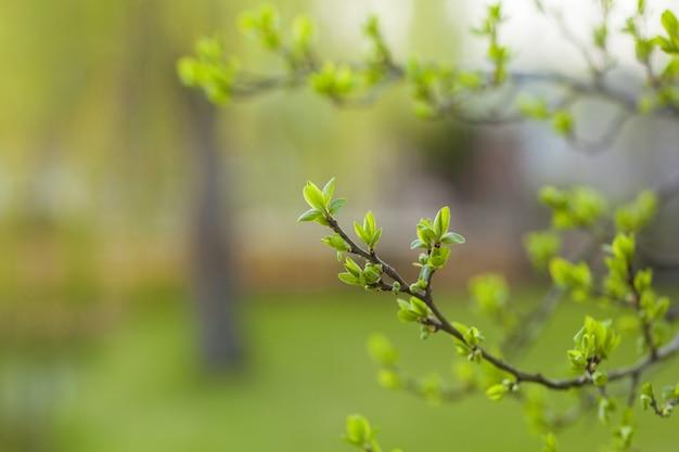 Le prime foglie e germogli primaverili su un bel verde