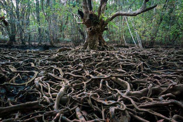 Le radici di un grande albero che diventa più grande. il concetto di crescita