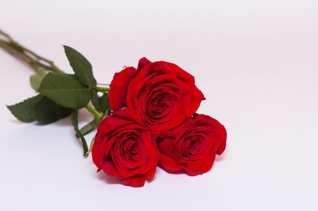 Le rose rosse con le foglie verdi mettono sul fondo bianco