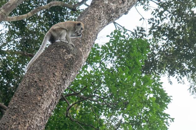 Le scimmie mangiano acqua intrappolata nell'albero.