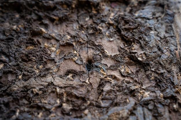 Le termiti stanno mangiando il legno della casa. distruggono case, parti in legno e distruggono prodotti in legno.