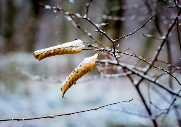 Le ultime foglie sugli alberi nella foresta innevata in inverno