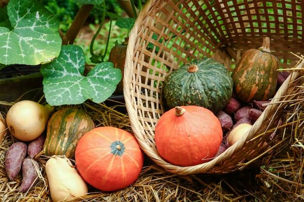 Le verdure biologiche coltivate dagli agricoltori includono meloni, zucche, patate dolci.