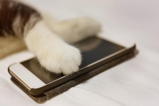 Le zampe del gatto toccano lo smart phone sul letto bianco