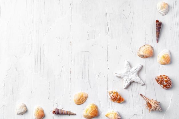 Legno bianco con conchiglie, copia spazio