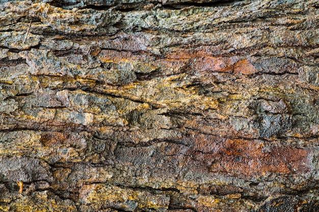 Legno di corteccia strutturato bagnato