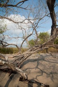 Legno secco sulla sabbia che guarda verso il cielo blu attraverso gli alberi spogli dalla spiaggia sabbiosa
