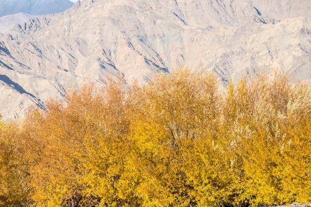 Leh ladakh bellissimo paesaggio, autunno colorato con sfondo di montagne