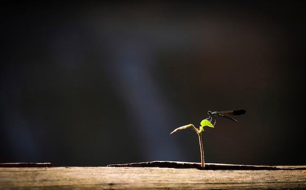 Libellula nera su piccola pianta che cresce su legno con luce solare e sfondo nero /